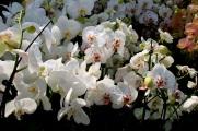 flowersproduce45