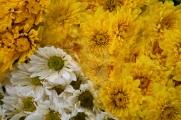 flowersproduce47