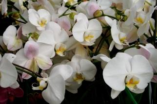 flowersproduce58